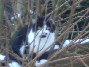 unser grumpy cat